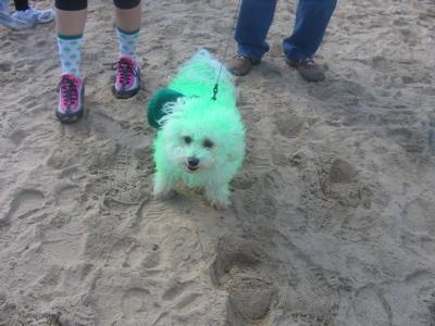green-dog.jpg